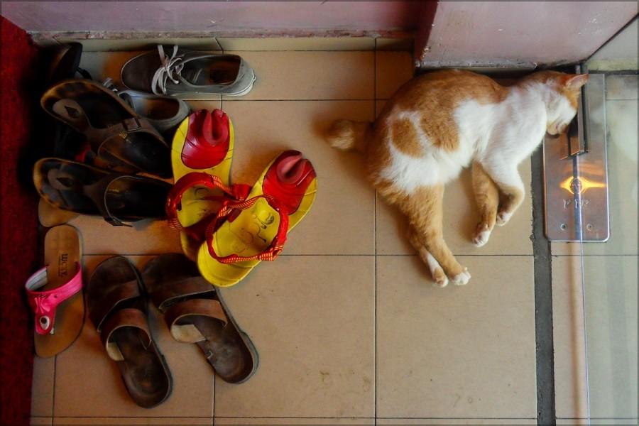 Коты здесь короткохвостые