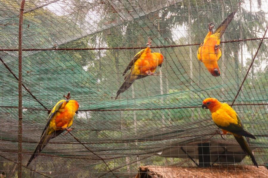 По ту сторону свободы, KL Bird park