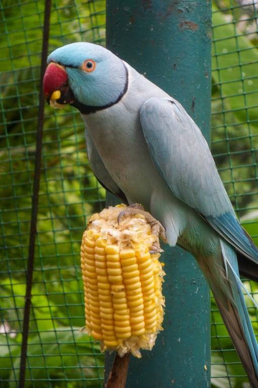 Живность парка птиц