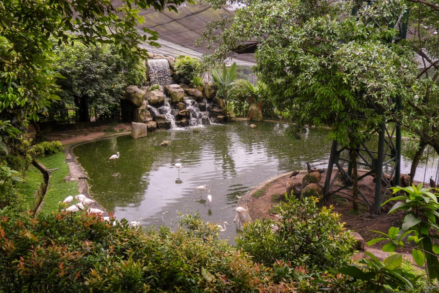 Фламингоу, парк птиц в Куала Лумпур