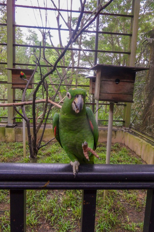 Попугаец, парк птиц в КЛ