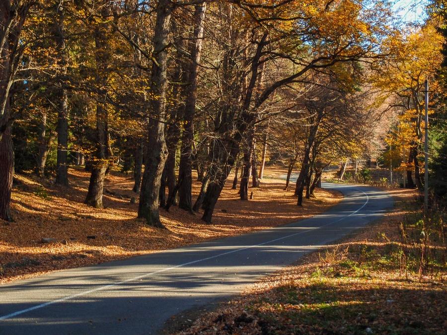 Золотая осень в Боржоми