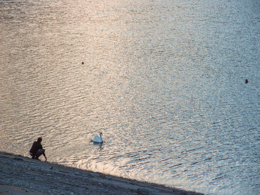 Мишо на озере Ильи в Кахетии